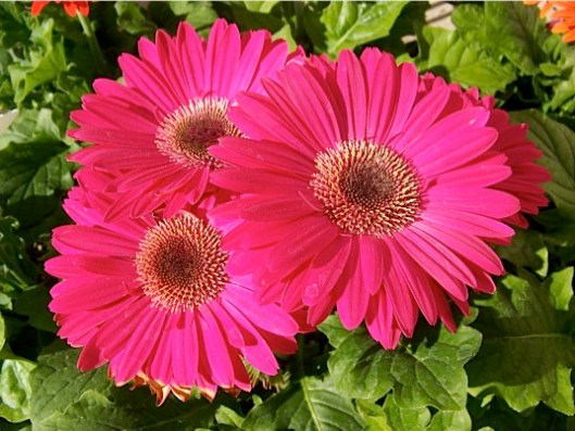 Resultado de imagen para aire, vida, plantas , amor