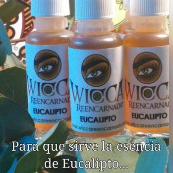 esencia-de-eucalipto