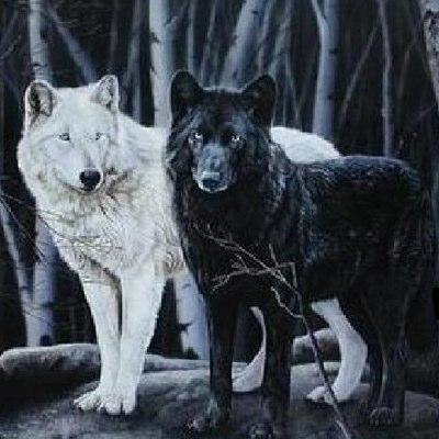 white-wolf-black-wolf