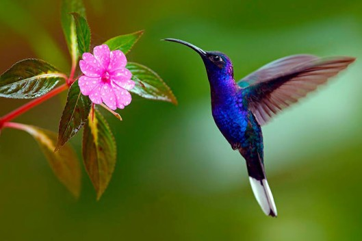 cuando-veas-un-colibrc38d-un-alma-amada-te-vino-a-visitar-1
